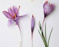 صادرات زعفران سرگل