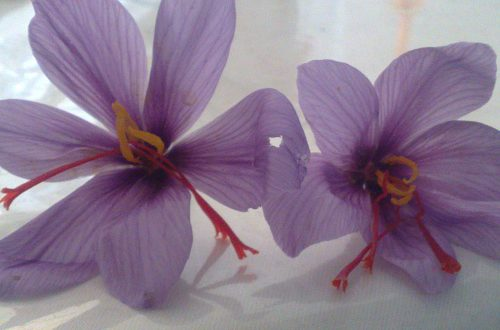 صادرات زعفران بسته بندی